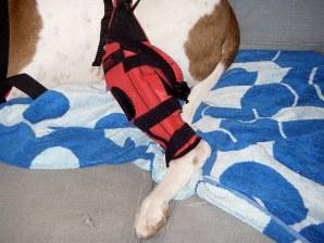 Stifle Portion of Atrac Dog Knee Brace