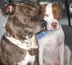 Tucker with his brother, Guapo at Christmas