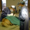Surgical Repairs for Torn Dog Knee Ligaments