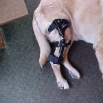 Make Knee Brace for Dog