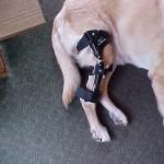 Make Knee Brace for Dog