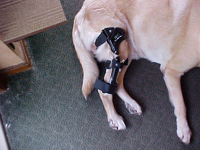 orthopets knee brace