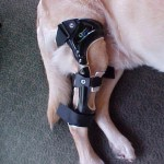 Dog CM Knee Braces