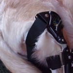 Knee Braces for Canine