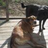 TTA vs. Stem Cells for Dogs