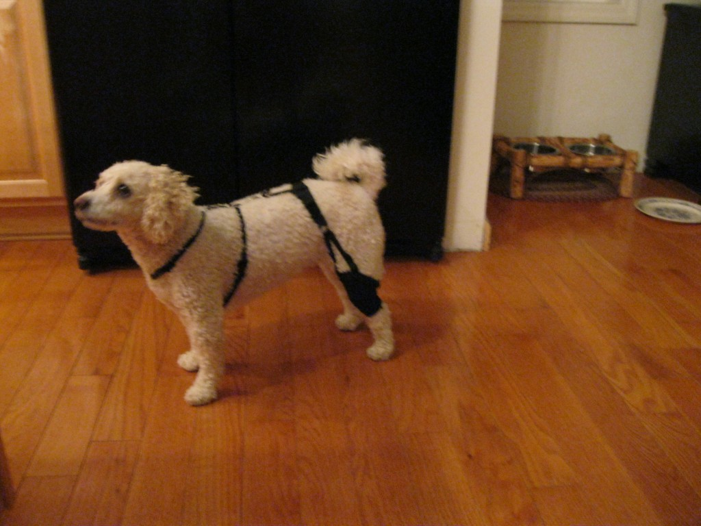 small dog acl brace
