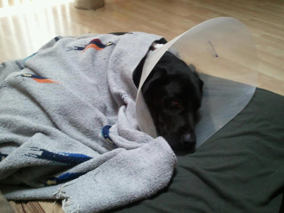 Dog S Recovery From A Tplo