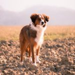 Veterinary Prolotherapy