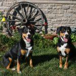 Simitri Success - Harley and Rudy