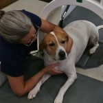 Pulsed Signal Therapy (PST) for Dogs