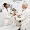 Consult with your vet to find out the best treatment options for partial ACL tears in dogs