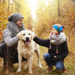How To Prevent Dog ACL Injuries