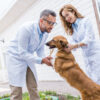 Veterinarian and dog owner discussing the best surgery option for the dog