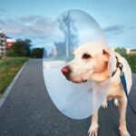 Things To Consider Before Dog ACL Surgery