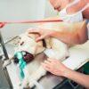 Sucess Rates of Dog Knee Surgery