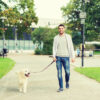 Can A Dog Walk After A Torn ACL
