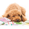 Dog Knee Surgery Financing