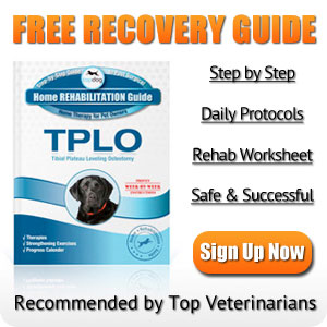 Dog TPLO Surgery Rehabilitation Guide