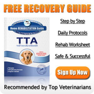 Dog TTA Surgery Rehabilitation Guide